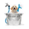 Hond wassen